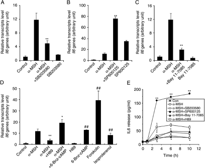 PKA, p38 MAPK, JNK, and IKK are involved in α-MSH-indu