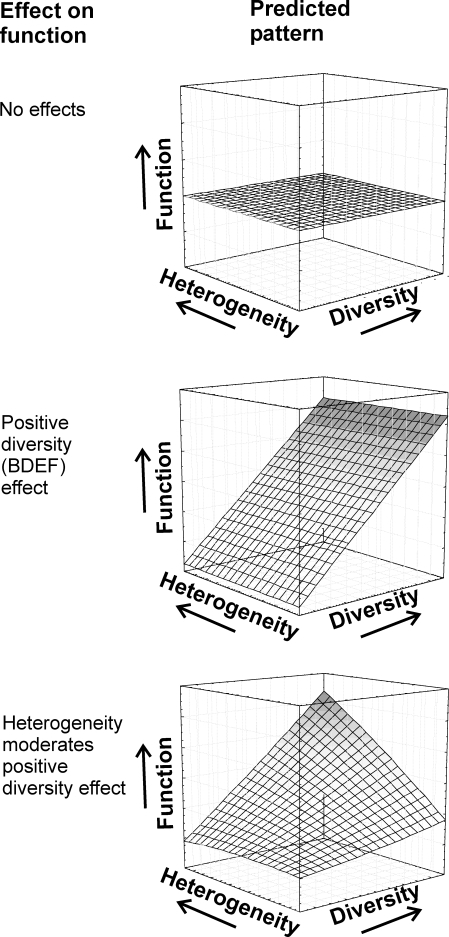 Hypothetical Interactions between Biodiversity and