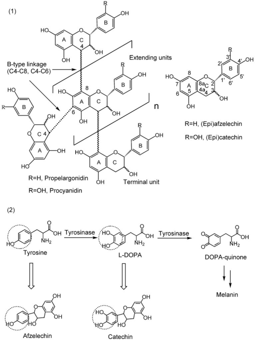 Structure of the condensed tannins, flavan-3-ol monomer