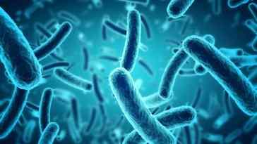 Micro_Organisms