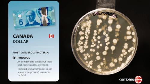 Canada dollar bacteria