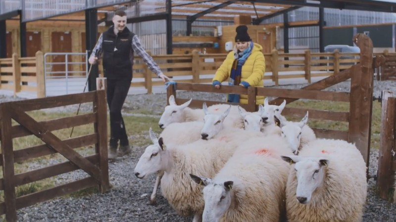 Northern Irish actress Tara Lynne O'Neill visits the Glenshane Country Farm, where fourth-generation shepherd Jamese McCloy demonstrates how he uses whistles and gestures to direct his border collies to herd sheep.