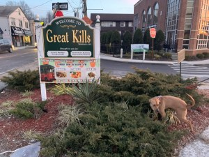 great Killa dog