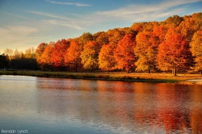 foliage in viaggio -new-england-brendan-t-ynch