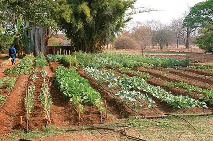 orto coltivato