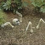 埋まっている骨