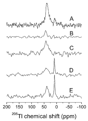 Figure 27. 205Tl MAS NMR spectra of Tl+ interacting with Na+, K±ATPase from shark rectal glands.