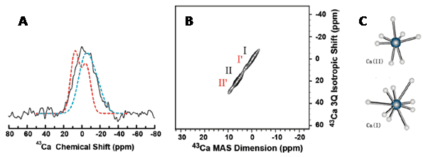 Figure 18 shows the calcium-43 MAS experiments probing the interaction of osteocalcin bone protein with calcium sites in 5% carbonated apatite.