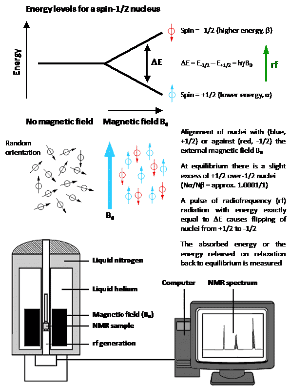 Figure 1. The basic NMR experiment with a spin-1/2 nucleus