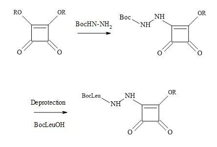 Figure 50. Synthesis of aza squaryl derivatives