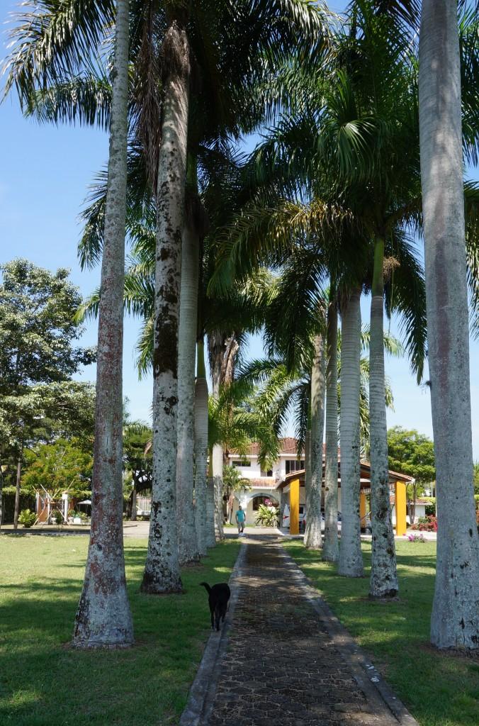 Garden|El Lugar Hotel| Pereira