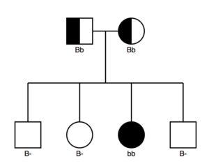 Black fur color: a dominant trait