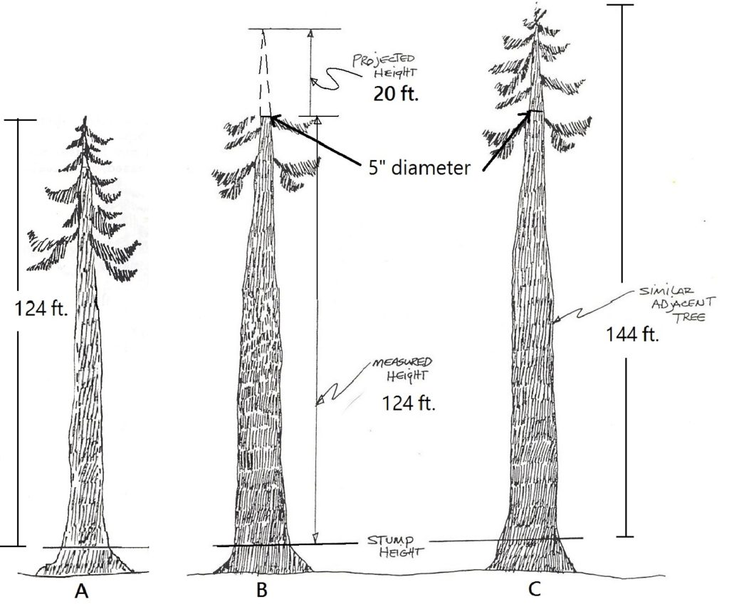 2.5 Measuring Height on Irregular Trees