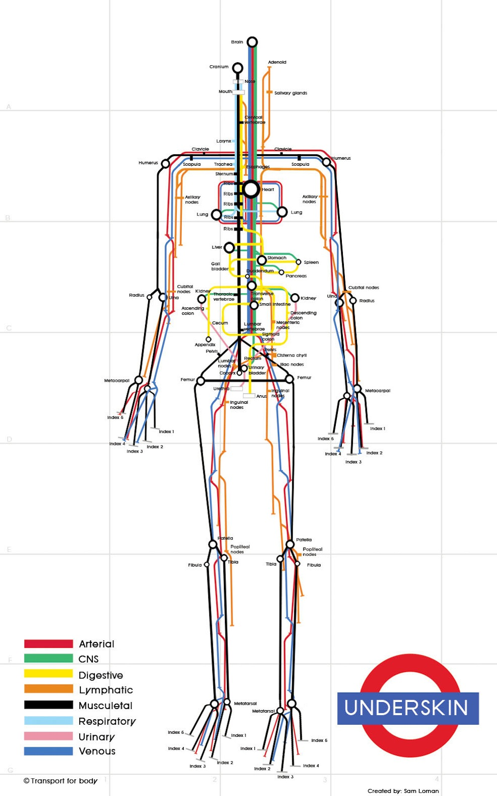 hight resolution of human body map metro