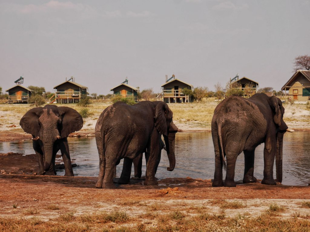 Watering Hole at Elephant Sands