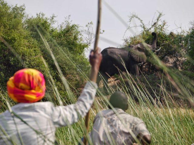 Elephants from mokoro