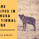 Game Drives in Etosha National Park with Acacia Africa