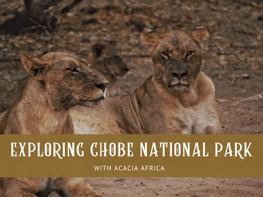Exploring Chobe National Park with Acacia Africa