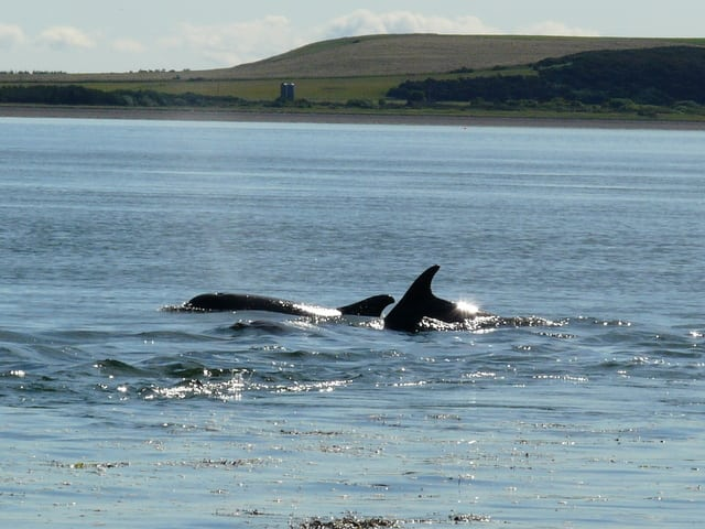 Chanonry Point. Pic credit: Sylvia Duckworth.