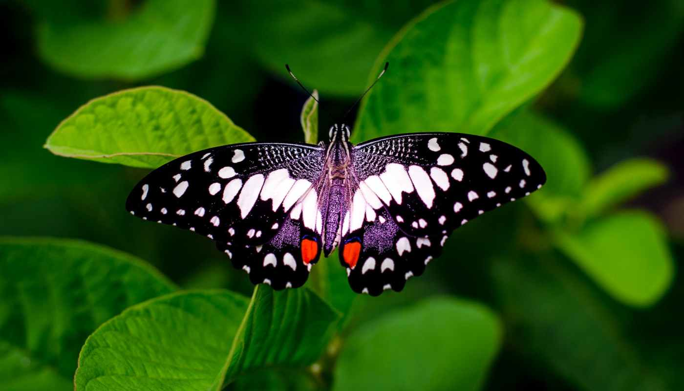 close up photography of a butterfly