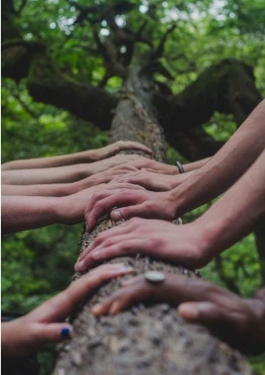 image of a tree trunk where hands are place on it