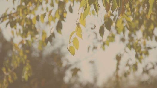 picture of leaves hanging from a tree