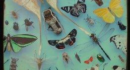 Joy of Programming: Types of Bugs