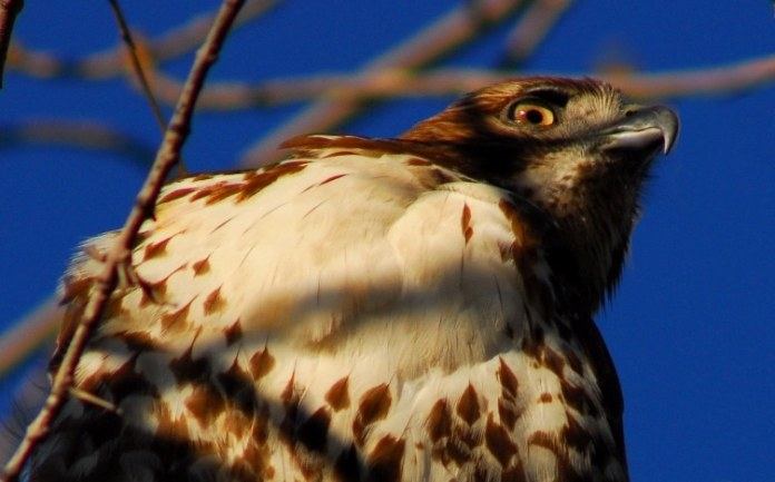 An angry bird or a free bird?