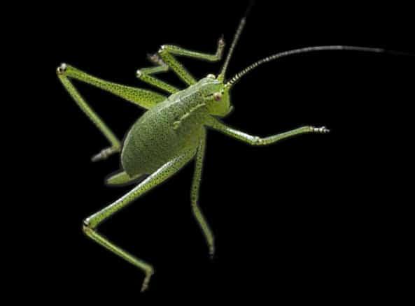 Debugging introduces bug(s)?
