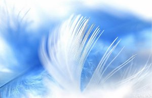 Feather and Sky
