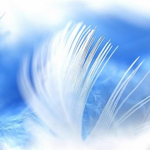 Feathercloseup