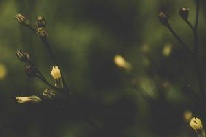 Alleviating Compassion Fatigue
