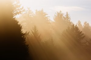 Awakening With Nature