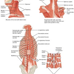 Skeletal Muscle Diagram Labeled Wiring For Car Fog Lights Core Great Installation Of 11 3 Axial Muscles The Head Neck And Back Anatomy Physiology Rh Opentextbc Ca
