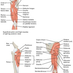 Gluteus Muscles Diagram Pain Software System Model 11 6 Appendicular Of The Pelvic Girdle And Lower