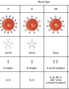 This table shows the different blood types antibodies in plasma antigens also typing  anatomy and physiology rh opentextbc