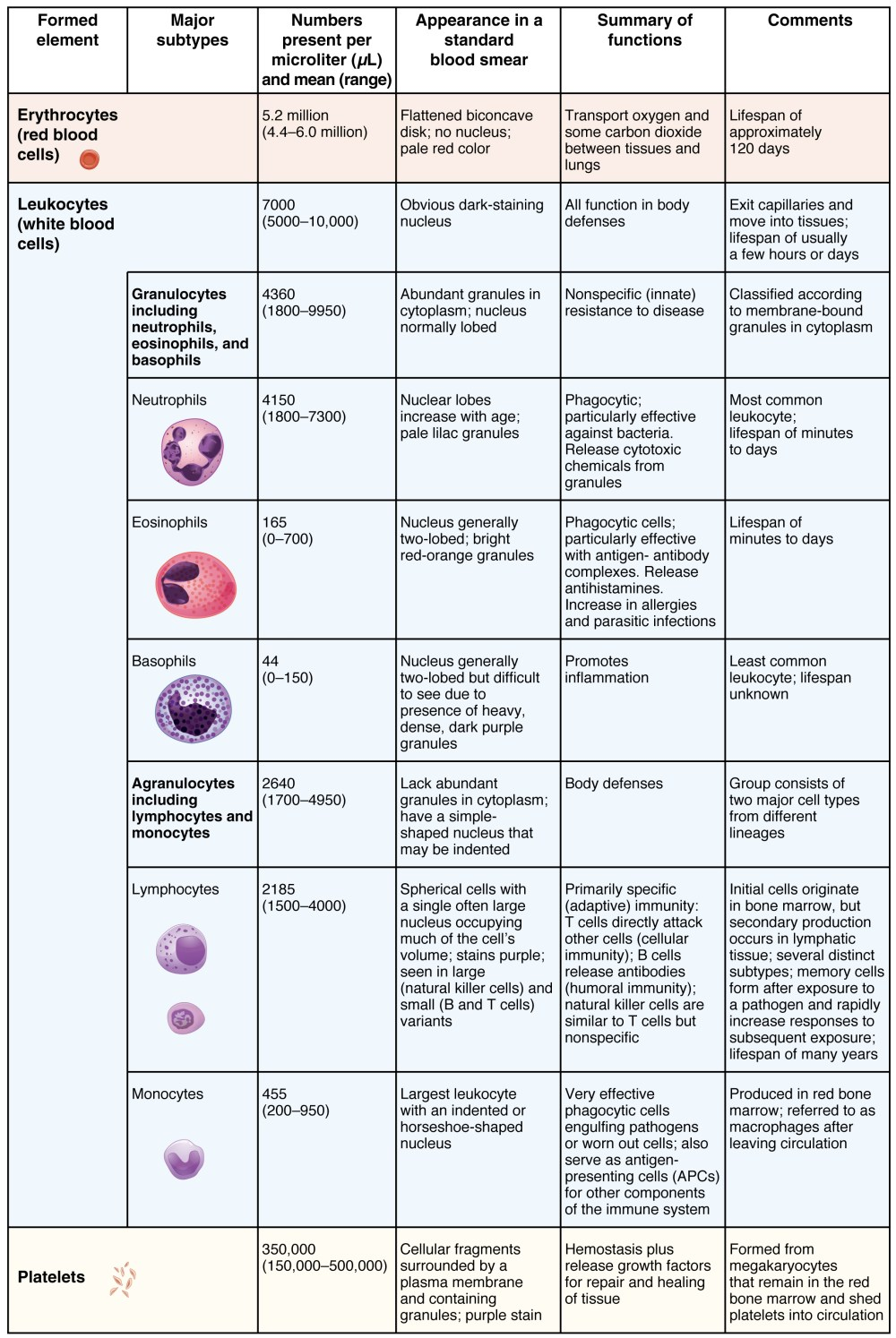 medium resolution of this table shows the different types of cells present in blood the number of cells figure 1