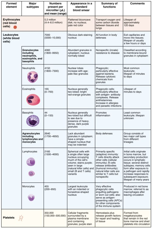 small resolution of this table shows the different types of cells present in blood the number of cells figure 1