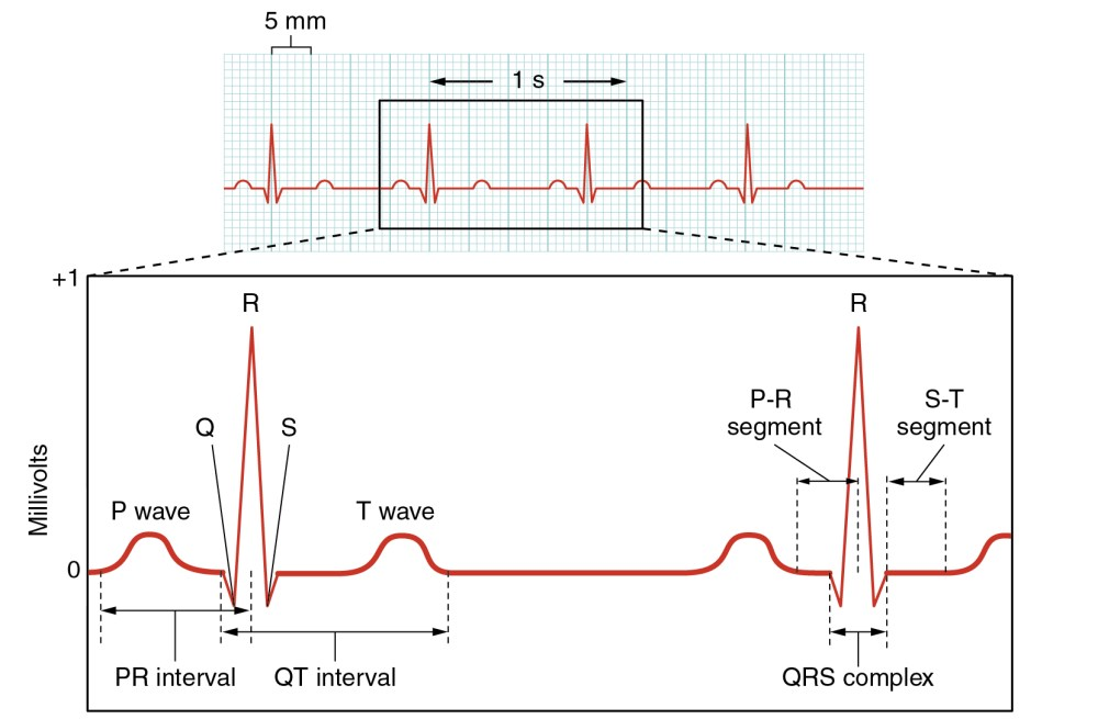 medium resolution of this figure shows a graph of millivolts over time and the heart cycles during an ecg