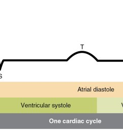 this image shows the correlation between the cardiac cycle and the different stages in a electrocardiogram [ 1683 x 800 Pixel ]