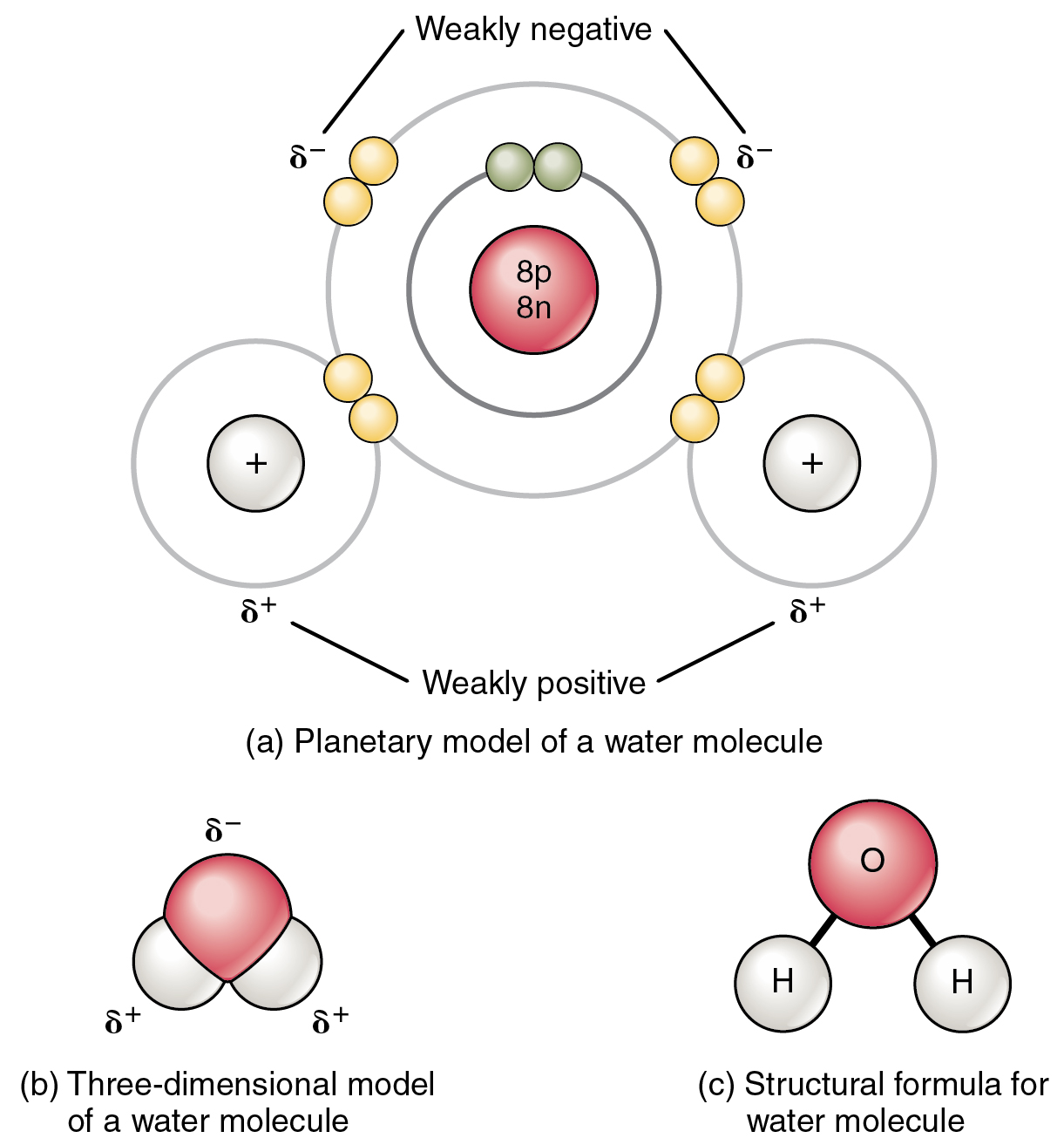 hight resolution of this figure shows the structure of a water molecule the top panel shows two oxygen