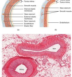 the top left panel of this figure shows the ultrastructure of an artery and the [ 1567 x 2125 Pixel ]