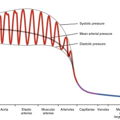Lab Values Skeleton Diagram Circuit Breaker Wiring House 20 2 Blood Flow Pressure And Resistance Anatomy Physiology This Graph Shows The Value Of Pulse In Different Types Vessels