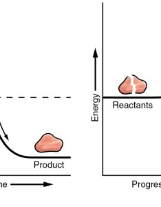 The left panel shows  graph of energy versus progress reaction in absence also chemical reactions  anatomy and physiology rh opentextbc