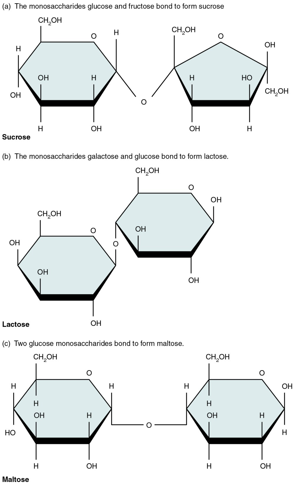 medium resolution of this figure shows the structure of sucrose lactose and maltose
