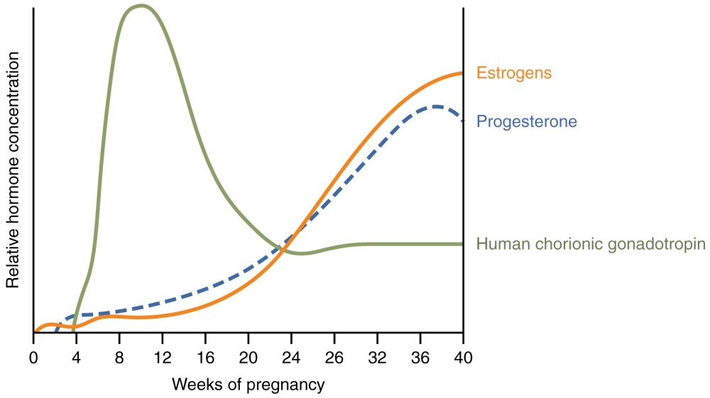 medium resolution of a graph hormone concentration versus week of pregnancy shows how three hormones vary throughout pregnancy figure 3