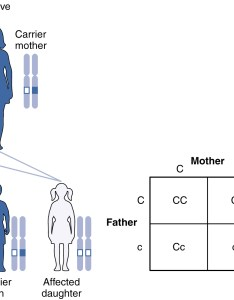 In this figure the offspring of  carrier father and mother are shown also patterns inheritance  anatomy physiology rh opentextbc