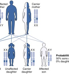 this figure shows the offspring from a carrier mother with the x linked recessive inheritance [ 1381 x 1046 Pixel ]