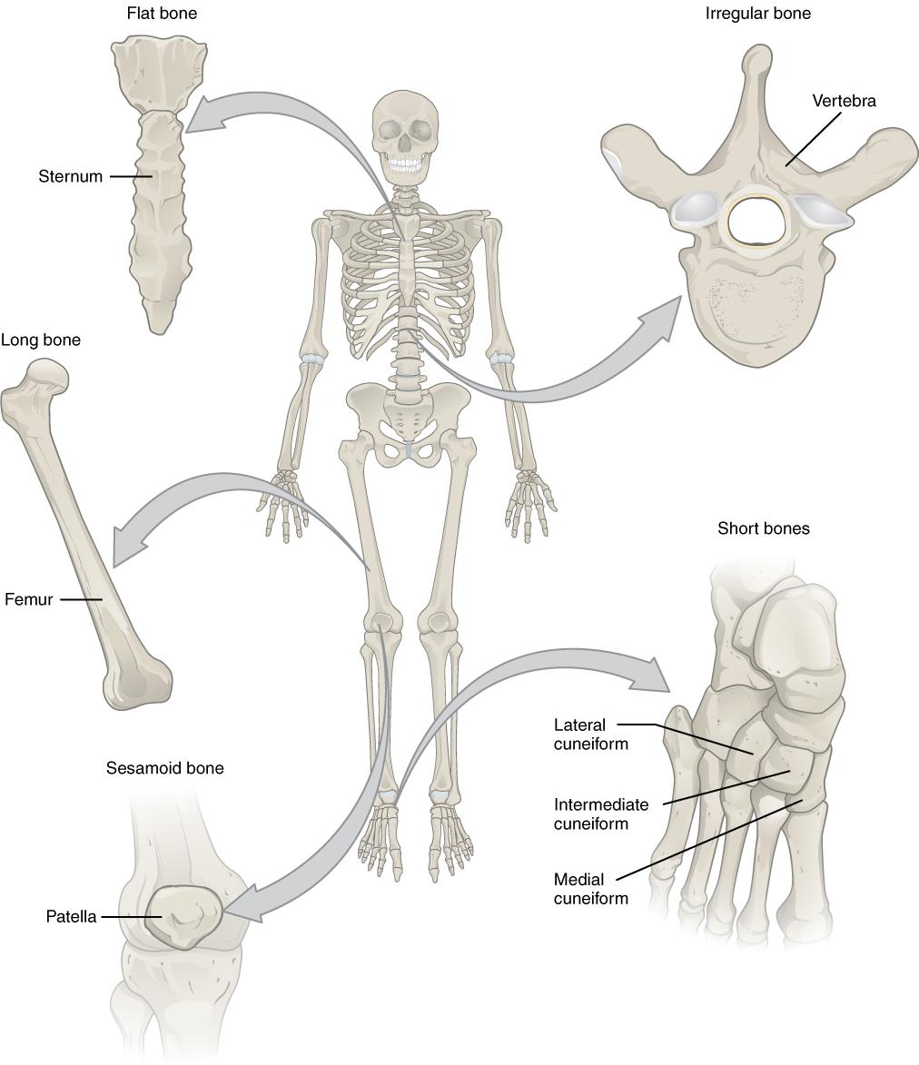 6 2 B E Cl Ss Ic Ti N Tomy Nd Physiology