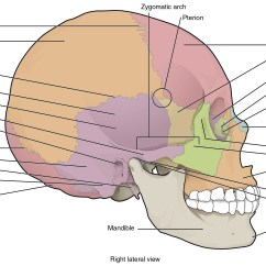 Human Skull Bones Diagram Labeled Motorcraft Alternator Wiring 7 2 The Anatomy And Physiology This Image Shows Lateral View Of Identifies Major Parts Figure 3